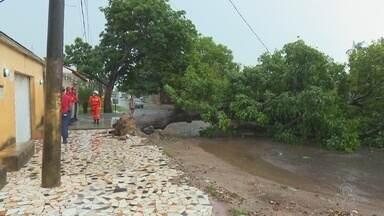 Em Macapá, forte chuva causa queda de árvores e alagamentos - Em Macapá, forte chuva causa queda de árvores e alagamentos