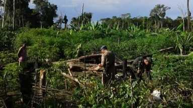 Corpos de vítimas de queda de avião no interior do AM são resgatados - Acidente ocorreu na sexta-feira (23). Uma pessoa sobreviveu.