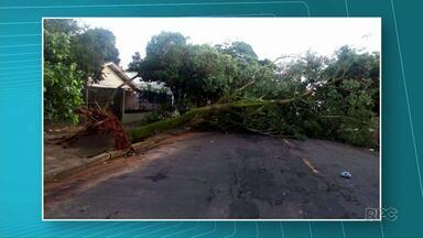 Chuva forte arranca árvores em Umuarama - Ninguém ficou ferido