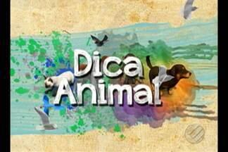 O quadro 'Dica Animal' fala sobre os cuidados aos filhotes de animais - Saiba quais são os cuidados que devemos ter ao ter filhotes de animais em casa