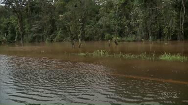 Paraná TV mostra estragos da chuva em Paranaguá - Entre quarta e quinta-feira choveu o esperado para quase um mês na cidade litorânea.