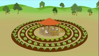 Produção integrada com horta e galinheiro aumenta a renda de agricultores no RJ - Em forma de mandala, a produção funciona com uma horta com canteiros circulares e um galinheiro no centro.
