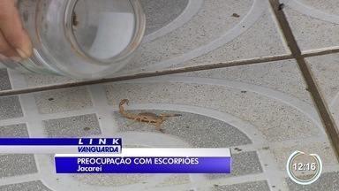 Moradores continuam preocupados com escorpiões em Jacareí - Em dezembro uma menina morreu.