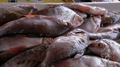 Cadeia do pescado é reduzida em mais de 200 toneladas em Santarém - Monitoramento é feito pelo Instituto de Ciências e tecnologias das águas da Universidade Federal do Oeste do Pará.