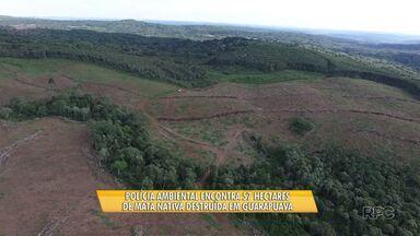 Polícia Ambiental encontra 57 hectares de mata nativa destruída em Guarapuava - A operação de combate ao desmatamento foi realizada na Serra da Esperança.