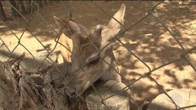 Devido ao calor, centro de triagem de animais silvestres em Conquista redobra os cuidados - O Cetas atende atualmente quase 500 animais.