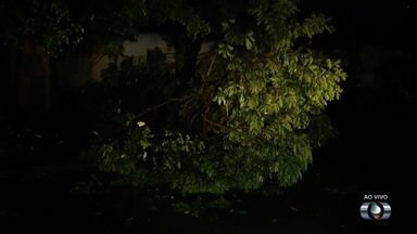 Árvore cai no Setor Pedro Ludovico, em Goiânia - Vegetação caiu durante a chuva da madrugada na capital goiana.