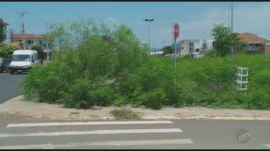 Matagal atrapalha cruzamento em avenida de Santa Bárbara d'Oeste - De acordo com um telespectador da EPTV, afiliada da TV Globo, ele sofreu um acidente no local na última semana.