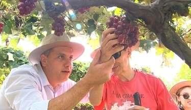 Pessoas com deficiência visual conhecem parreira de uva em São Roque - Um grupo formado por pessoas com deficiência visual viajou da capital a São Roque (SP) para conhecer uma vinícola. Apreciadores de vinho, os turistas tiveram a oportunidade de colher a uva na parreira e participar da pisa da fruta, atração que atrai centenas de visitantes durante a vindima, a época de colheita.