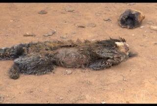 Polícia reforça fiscalização para evitar que a população mate os macacos no Leste de MG - Macacos estão sendo mortos em Valadares.