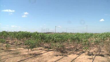 Experimento no Agreste e Sertão de AL pretende baratear a irrigação - Produtores estão contando com energias eólica e solar.