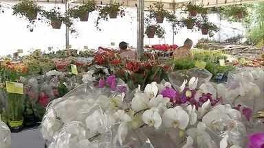 Feira em Corumbá leva flores do interior de SP para o meio do Pantanal - Entrada é gratuita e feira vai até o dia 12 de março.