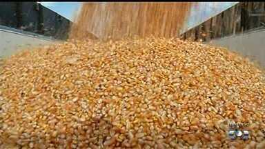 Produtores colhem soja e plantam milho safrinha, em Goiás - Milho precisa ser plantado o quanto antes para garantir desenvolvimento adequado.