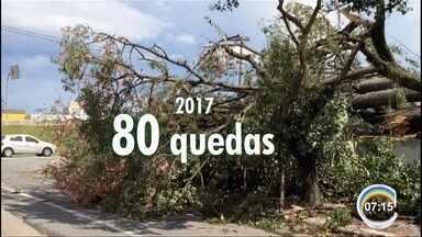 Queda de árvores em 2017 supera total do ano passado em São José, SP - Até 1º de março foram 80 ocorrências; em 2016 foram 50 quedas.