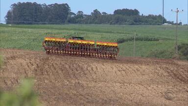 Com aumento na produção de grãos, Cruz Alta volta a contratar trabalhadores com carteira - 88% delas foram no agronegócio.