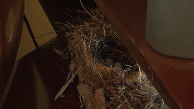 Pássaros fazem ninho em estante de residência, em Juazeiro - Situação surpreendeu e agradou aos moradores da casa.