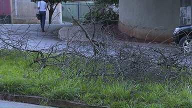 Galhos de árvores e entulho vão ser depositados em pedreira desativada - Esta foi a solução encontrada pela CMTU. O descarte desses materiais foi proibido na central de resíduos pelo IAP.