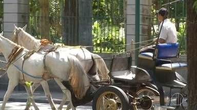 Charreteiros de Petrópolis, RJ, estudam trocar cavalos por charretes elétricas - Assista a seguir.