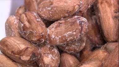 Erro na fermentação do cacau pode provocar bolor nas amêndoas - A Poliana Bastos Del Piero, de Aracruz (ES) conta que realizei um teste caseiro de fermentação de cacau e 48 horas depois encontrou as amêndoas completamente emboloradas.