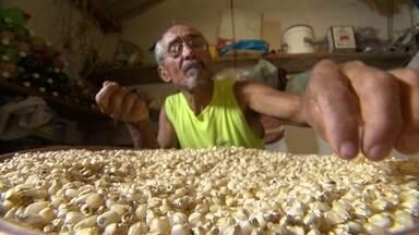 Banco de Sementes - Produtores rurais ajudam a preservar sementes