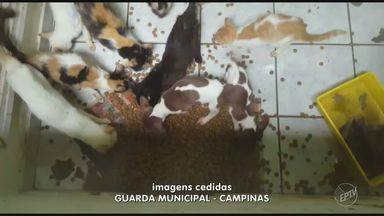 Polícia e GM encontram mais animais em casas do coronel aposentado acusado de maus-tratos - Representantes de ONGs de proteção animal fizeram o resgate dos animais em estado mais crítico. Duas casas no bairro Chapadão foram vistoriadas pela polícia.