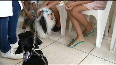 Cães ajudam na socialização de crianças atendidas pelo Centro de Atendimento Psicossocial - Cães ajudam na socialização de crianças atendidas pelo Centro de Atendimento Psicossocial