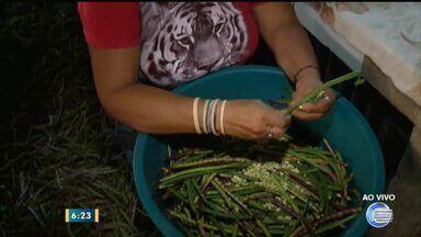 Semana Santa aumenta expectativa de vendas para feirantes da Ceapi - Semana Santa aumenta expectativa de vendas para feirantes da Ceapi