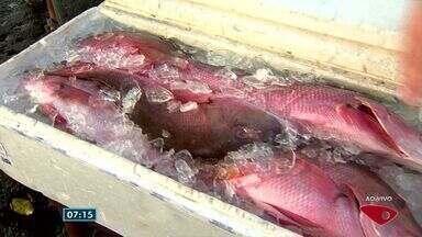 Doutor em Ciências dos Alimentos dá orientações sobre como escolher peixe - É preciso ter atenção.