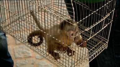 """Ibama realiza projeto """"De Volta ao Ninho"""" na cidade de Maturéia, PB - O principal objetivo é conscientizar a população dos riscos para a saúde em criar animais silvestres."""