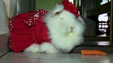 Capixabas ganham coelho de verdade na pácoa - Confira dicas para cuidar do animal.