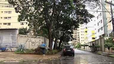 Morador teme que árvores caiam sobre sua casa por causa da chuva, em Goiânia - Temporal deixou o homem receoso.