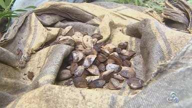 Preço da castanha aumenta em feiras e mercados de Porto Velho - O preço da castanha subiu em feiras e mercados de Porto Velho. É que a produção extrativista está menor este ano.