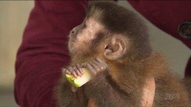 Animais apreendidos pela Polícia Ambiental ganham casa nova em Curitiba - Os animais estavam com traficantes em Londrina.