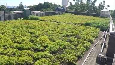 Veja como é feito um telhado verde - Estrutura exige cuidado com impermeabilização e responsável técnico