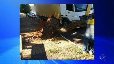Árvore cai em cima de caminhão em Marília - O motorista de um caminhão passou por um susto na manhã desta sexta-feira (2) em Marília (SP). Ele estacionou o carro ao lado de uma praça, no Bairro Juscelino Kubitschek, quando uma árvore caiu bem em cima da cabine do caminhão.