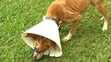 Agressões a cachorros, em Resende, podem ter sido cometidas pela mesma pessoa - Eles foram esfaqueados na cabeça em dias e locais diferentes.