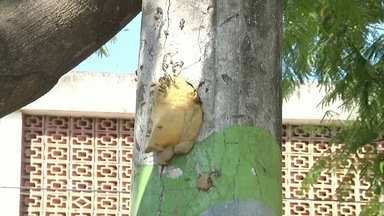 Ataque de abelhas em Campos, RJ, leva oito pessoas para o hospital - Assista a seguir.