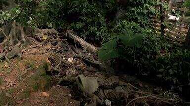 Água de esgoto que escorre em área verde prejudica moradores do Benedito Bentes - Problema causa transtornos a comunidade local.