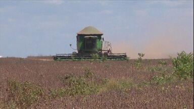 Veja outros destaques da semana no campo - O Brasil deve produzir cerca de 45 milhões de sacas de café em 2017, segundo levantamento divulgado pela Conab esta semana.
