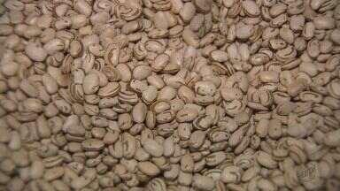 Novas opções de feijão devem chegar ao mercado no segundo semestre de 2017 - Variedades foram desenvolvidas pelo Instituto Agronômico de Campinas.