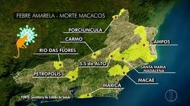 Secretaria Estadual de Saúde confirma morte de macaco por febre amarela - Animal foi encontrado morto em Santa Maria Madalena, no RJ. Com esse caso, número de animais mortos encontrados no RJ sobe para nove.