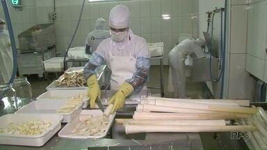 Indústria de processamento de palmito na região incentiva produção de pupunha - Agricultores da região de Umuarama estão apostando no cultivo. Antes, produto só era comum no litoral do Paraná.