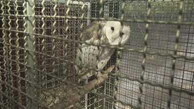 Superlotado, Centro de Reabilitação de Aves de Araras requer ampliação - Apenas neste ano, espaço recebeu 133 animais. Prefeitura avalia reforma.