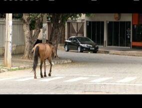 Cavalos são vistos soltos em Governador Valadares - Situação fez com que motoristas precisam redobrar a atenção em algumas vias.