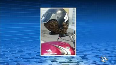 Motociclista encontra enxame dentro de capacete após estacionar moto em rua de Gravatá - Corpo de Bombeiros foi chamado.
