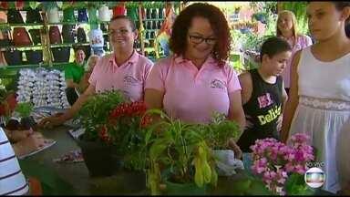 Técnicas ajudam a alavancar vendas de negócios - Família mostra como toca venda de plantas no Recife