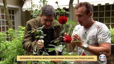 Engenheiro Florestal Murilo Soares ensina técnicas para podar plantas - Poda nas plantas deve ser feita nos meses que não têm a letra 'R'