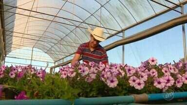 Primeira faculdade de flores do país é inaugurada em Holambra; inscrições estão abertas - O objetivo é dar uma base para quem lida com as plantas no dia-a-dia e também para quem busca entrar no mercado.