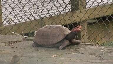 OAB/SC investiga situação dos animais do Parque Ecológico do Córrego após denúncias - OAB/SC investiga situação dos animais do Parque Ecológico do Córrego após denúncias