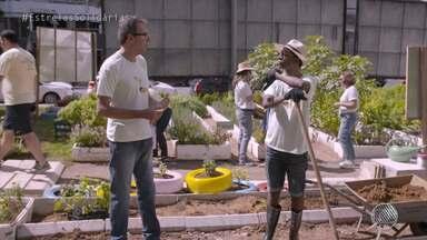 """Solidariedade: Luís Miranda mostra projeto que cultiva alimentos em área urbana da capital - Conheça a iniciativa que foi apresentada no programa """"Estrelas Solidárias""""."""
